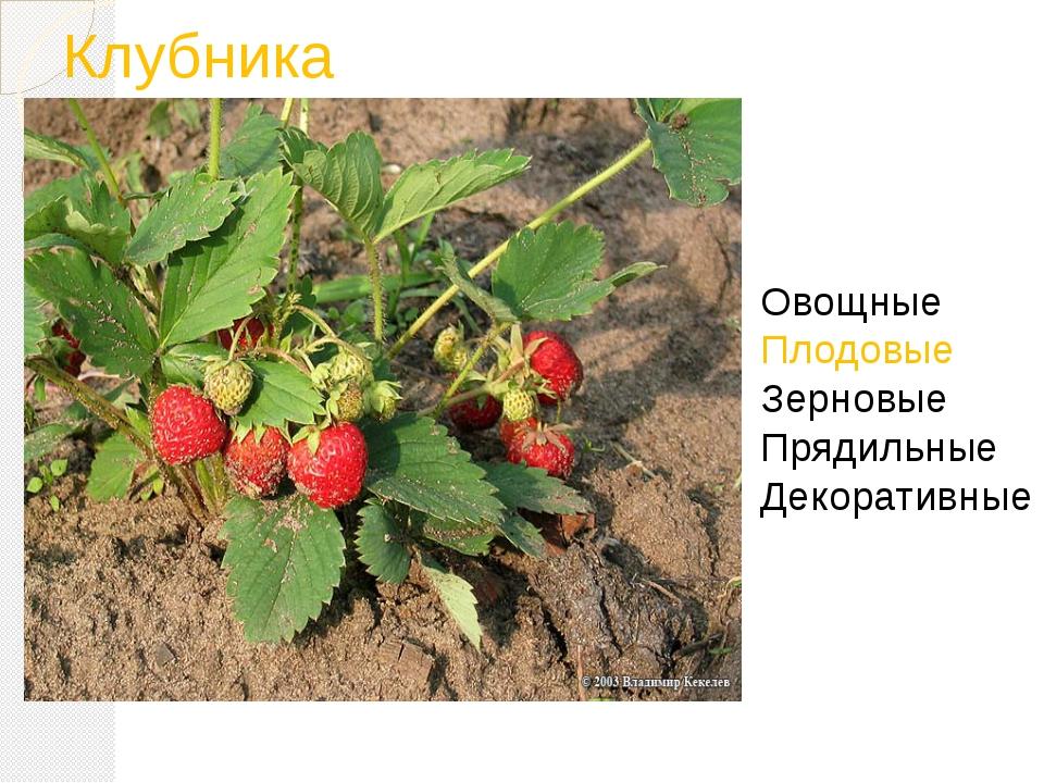 Клубника Овощные Плодовые Зерновые Прядильные Декоративные