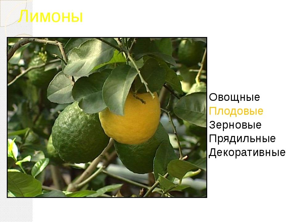 Лимоны Овощные Плодовые Зерновые Прядильные Декоративные