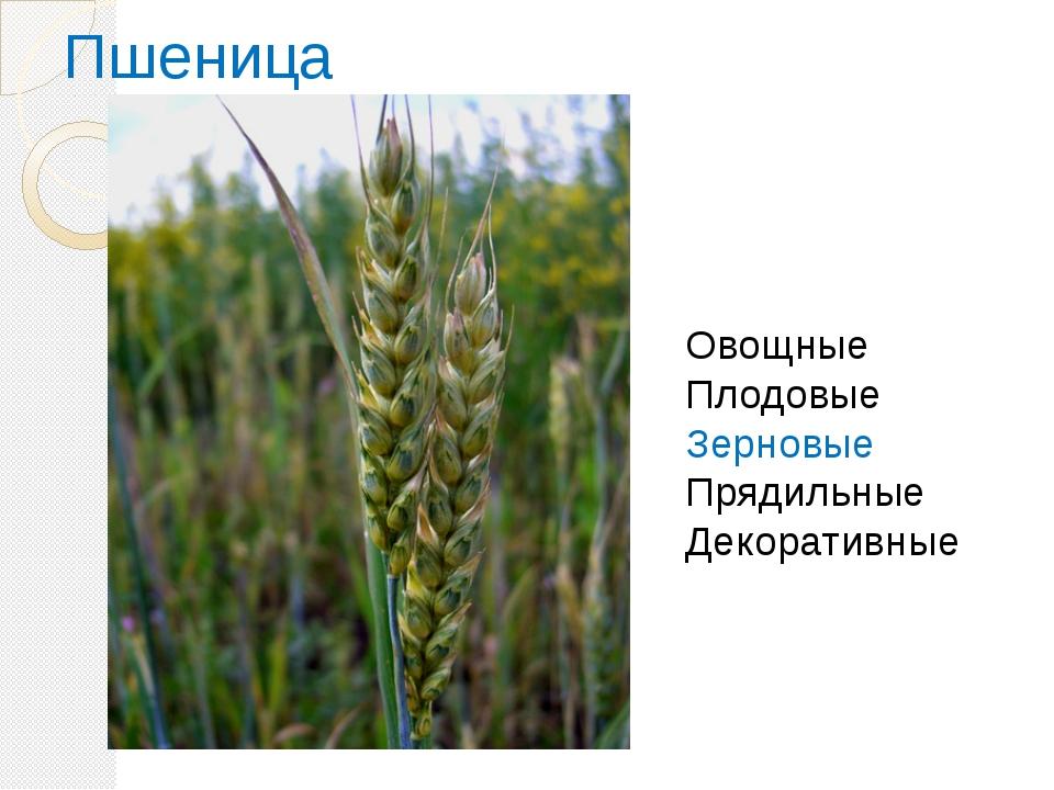 Пшеница Овощные Плодовые Зерновые Прядильные Декоративные