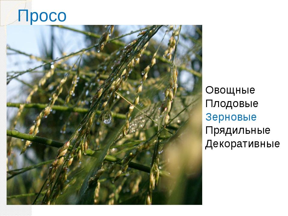Просо Овощные Плодовые Зерновые Прядильные Декоративные