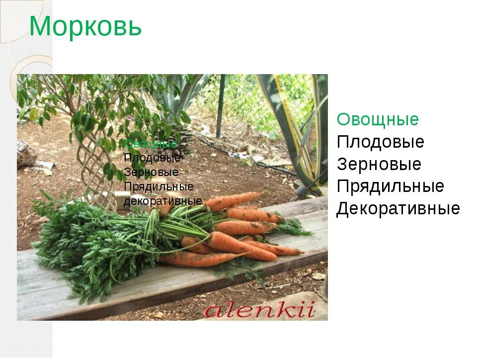 Морковь Овощные Плодовые Зерновые Прядильные декоративные Овощные Плодовые Зе...