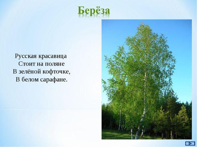 Русская красавица Стоит на поляне В зелёной кофточке, В белом сарафане.