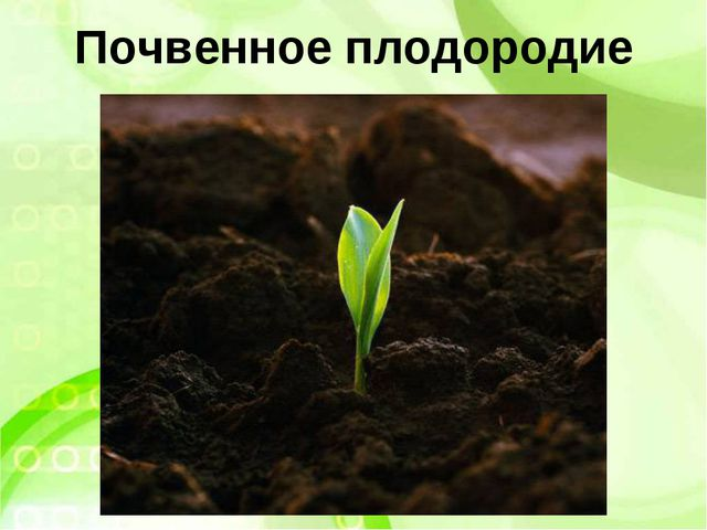 Почвенное плодородие