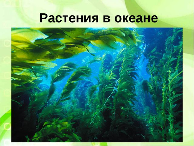 Растения в океане