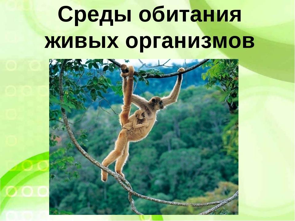 Среды обитания живых организмов