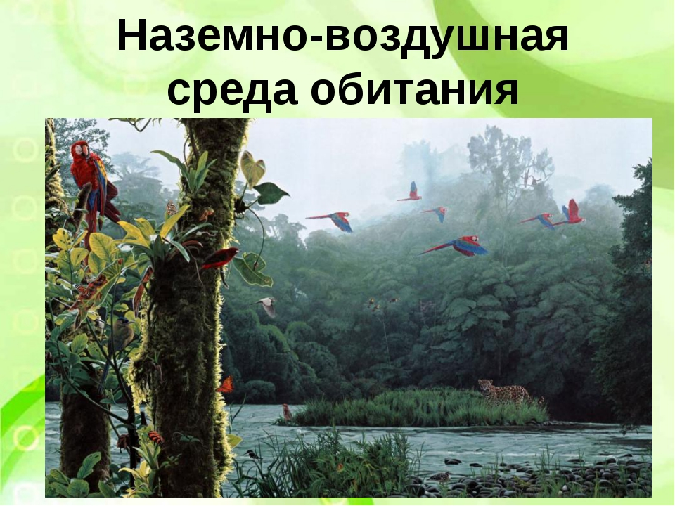 Наземно-воздушная среда обитания