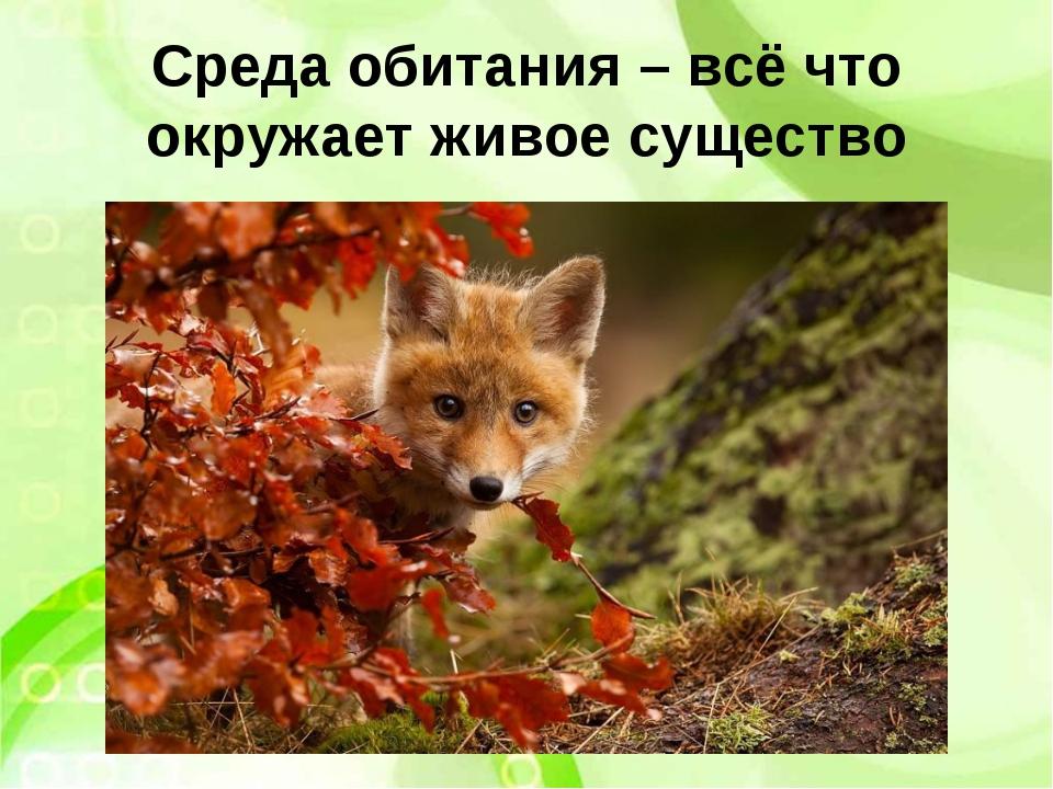 Среда обитания – всё что окружает живое существо