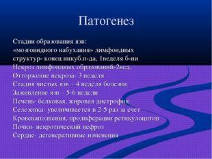 Патогенез Стадии образования язв: «мозговидного набухания» лимфоидных структу