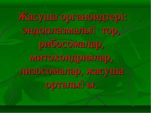 Жасуша органоидтері: эндоплазмалық тор, рибосомалар, митохондриялар, лизосом
