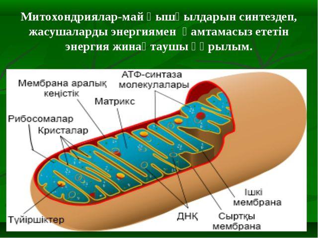 Митохондриялар-май қышқылдарын синтездеп, жасушаларды энергиямен қамтамасыз е...