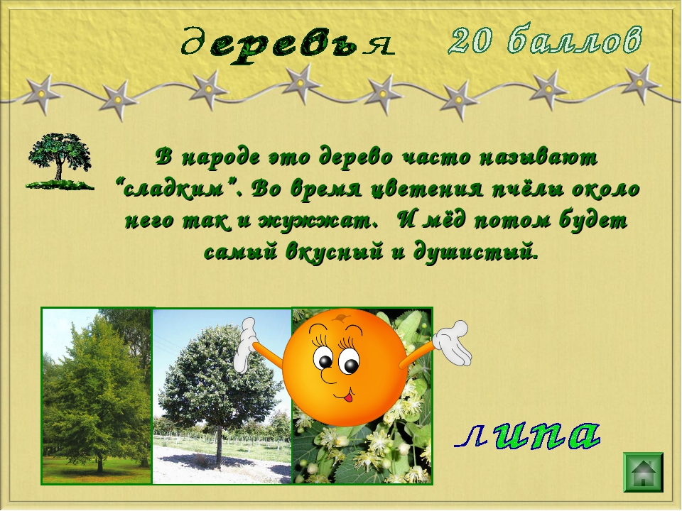 """В народе это дерево часто называют """"сладким"""". Во время цветения пчёлы около н..."""