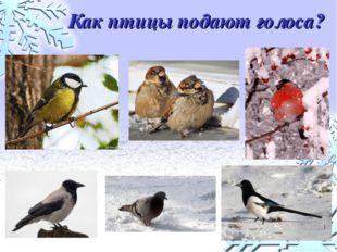 Как птицы подают голоса?