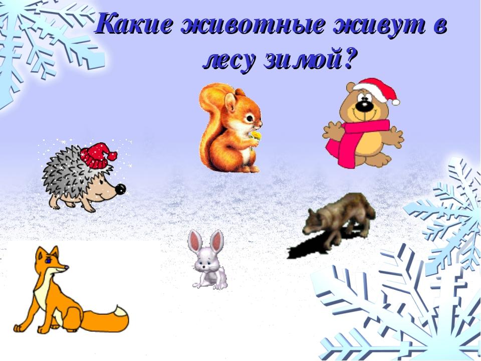 Какие животные живут в лесу зимой?