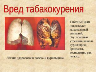 Легкие здорового человека и курильщика Табачный дым повреждает дыхательный эп