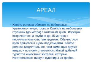 Xantho poressa обитает на побережье Крымского полуострова и Кавказа на неболь