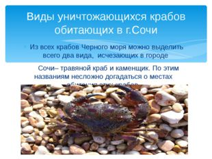 Из всех крабов Черного моря можно выделить всего два вида, исчезающих в город