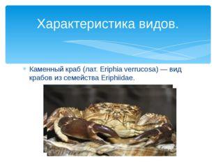 Каменный краб (лат. Eriphia verrucosa) — вид крабов из семейства Eriphiidae.