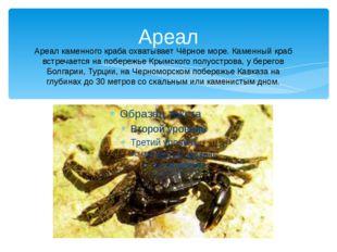 Ареал Ареал каменного краба охватывает Чёрное море. Каменный краб встречается