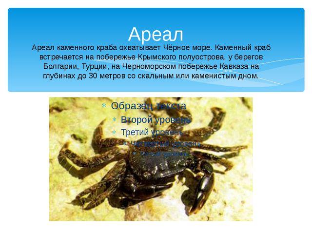 Ареал Ареал каменного краба охватывает Чёрное море. Каменный краб встречается...