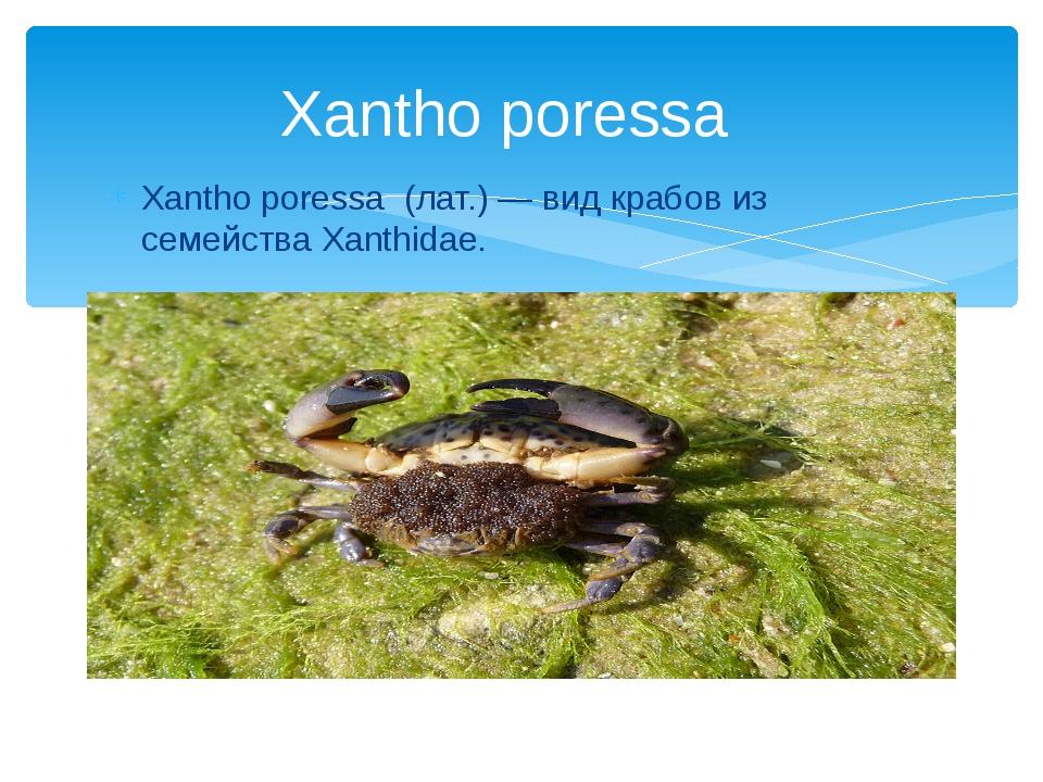 Xantho poressa (лат.) — вид крабов из семейства Xanthidae. Xantho poressa