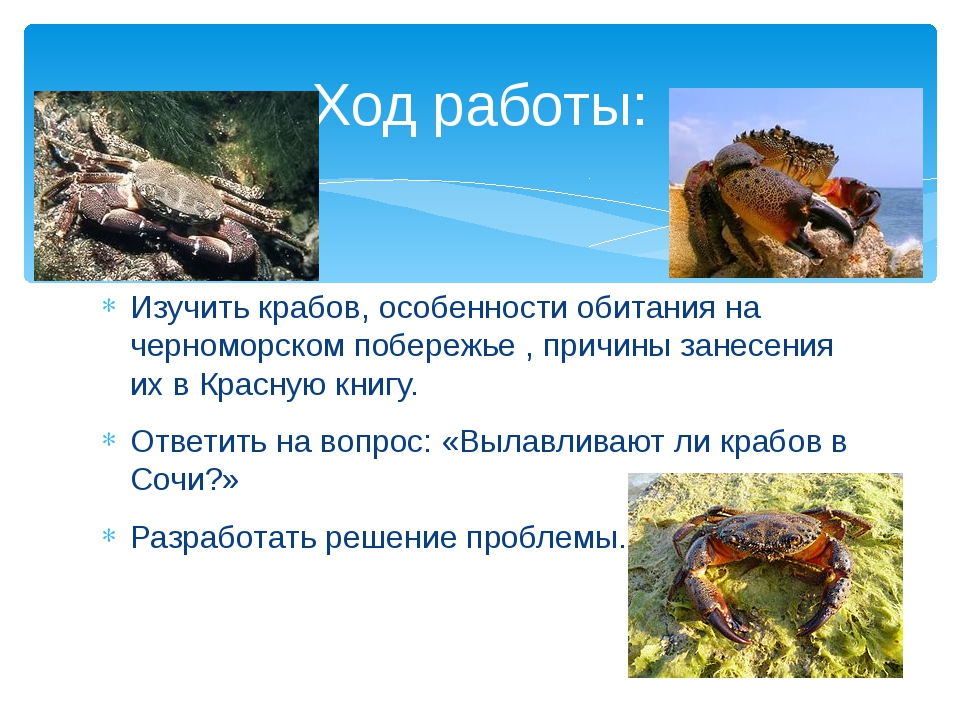 Изучить крабов, особенности обитания на черноморском побережье , причины зане...