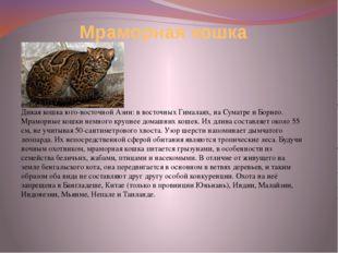 Мраморная кошка Дикая кошка юго-восточной Азии: в восточных Гималаях, на Сума