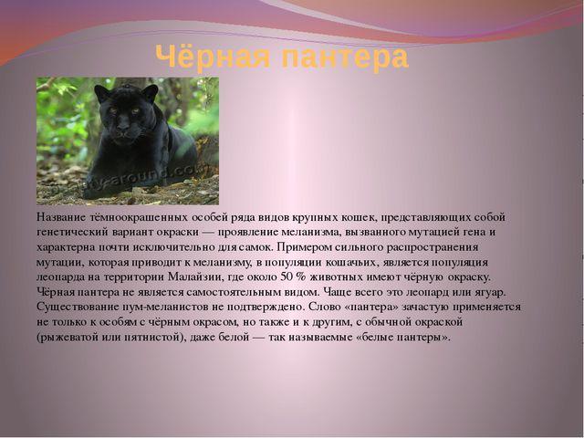 Чёрная пантера Название тёмноокрашенных особей ряда видов крупных кошек, пред...