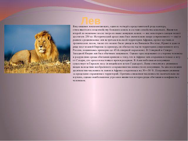 Лев Вид хищных млекопитающих, один из четырёх представителей рода пантера, от...