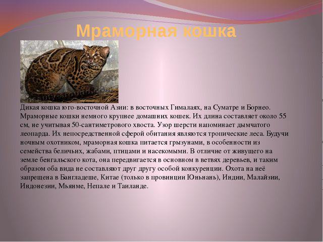 Мраморная кошка Дикая кошка юго-восточной Азии: в восточных Гималаях, на Сума...