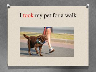 I took my pet for a walk