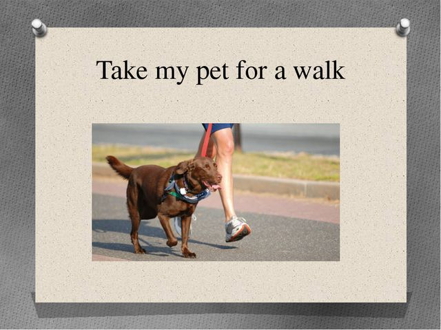 Take my pet for a walk