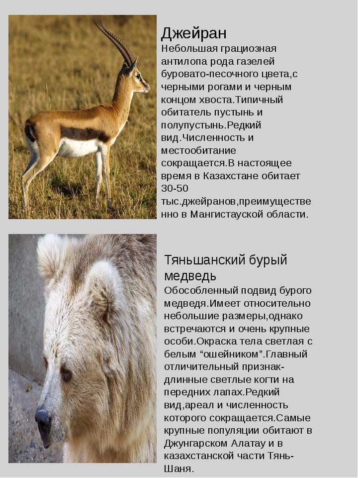 Джейран Небольшая грациозная антилопа рода газелей буровато-песочного цвета,с...