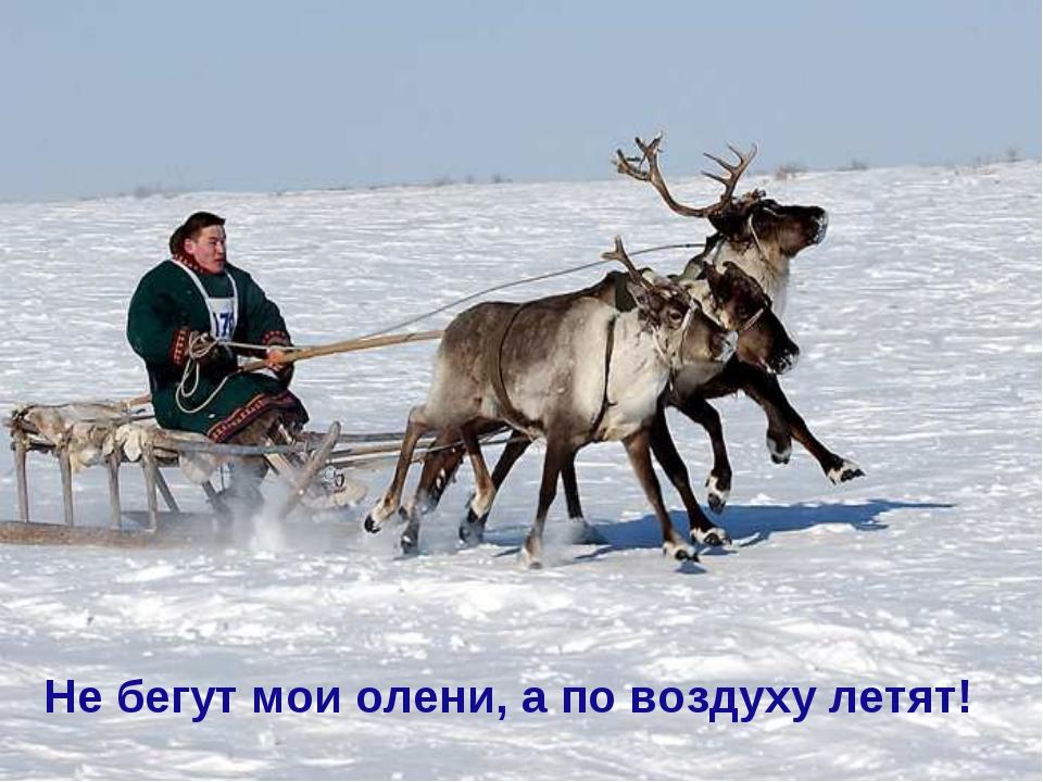 Не бегут мои олени, а по воздуху летят!