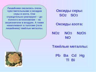 Лишайники оказались очень чувствительными к оксидам серы и азота. Они отрицат