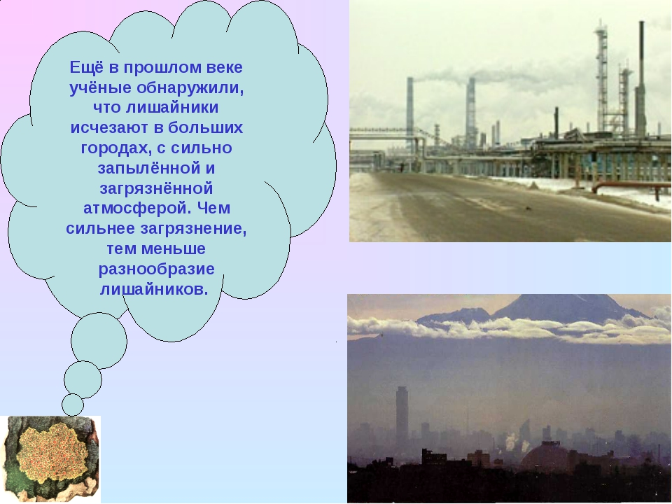 Ещё в прошлом веке учёные обнаружили, что лишайники исчезают в больших города...