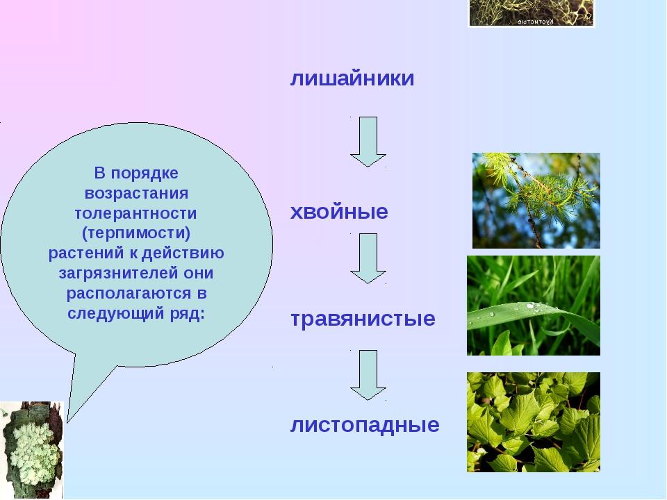 В порядке возрастания толерантности (терпимости) растений к действию загрязни...