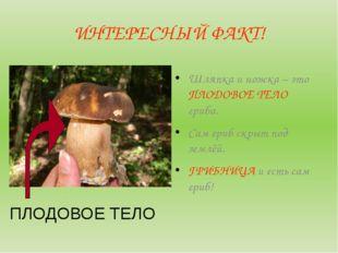 ИНТЕРЕСНЫЙ ФАКТ! Шляпка и ножка – это ПЛОДОВОЕ ТЕЛО гриба. Сам гриб скрыт под