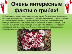 9) Оказывается, существуют даже хищные грибы! Питаются они червячками. Как ло