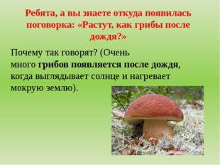 Ребята, а вы знаете откуда появилась поговорка: «Растут, как грибы после дожд