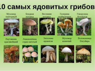10 самых ядовитых грибов! Мухомор пантерный Бледная поганка Весенняя поганка