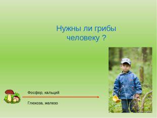 Нужны ли грибы человеку ? Фосфор, кальций Глюкоза, железо