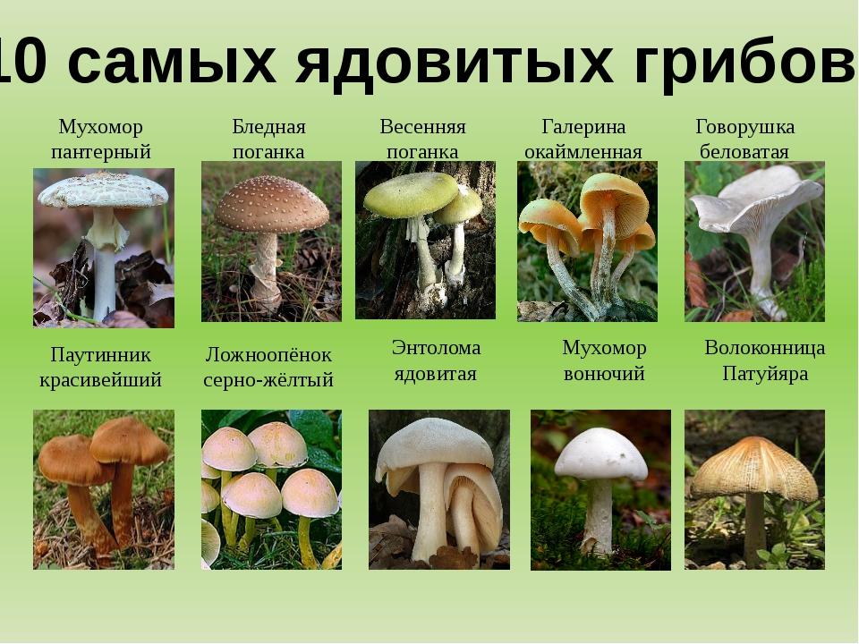 10 самых ядовитых грибов! Мухомор пантерный Бледная поганка Весенняя поганка...