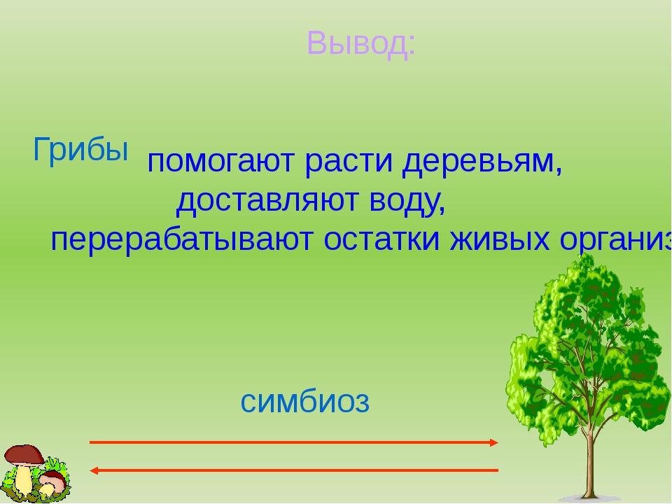 Вывод: Грибы помогают расти деревьям, доставляют воду, перерабатывают остатки...