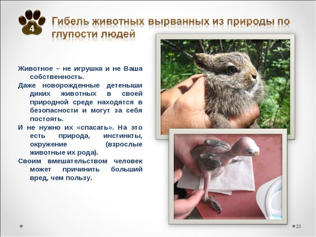 Животное – не игрушка и не Ваша собственность. Даже новорожденные детеныши ди...