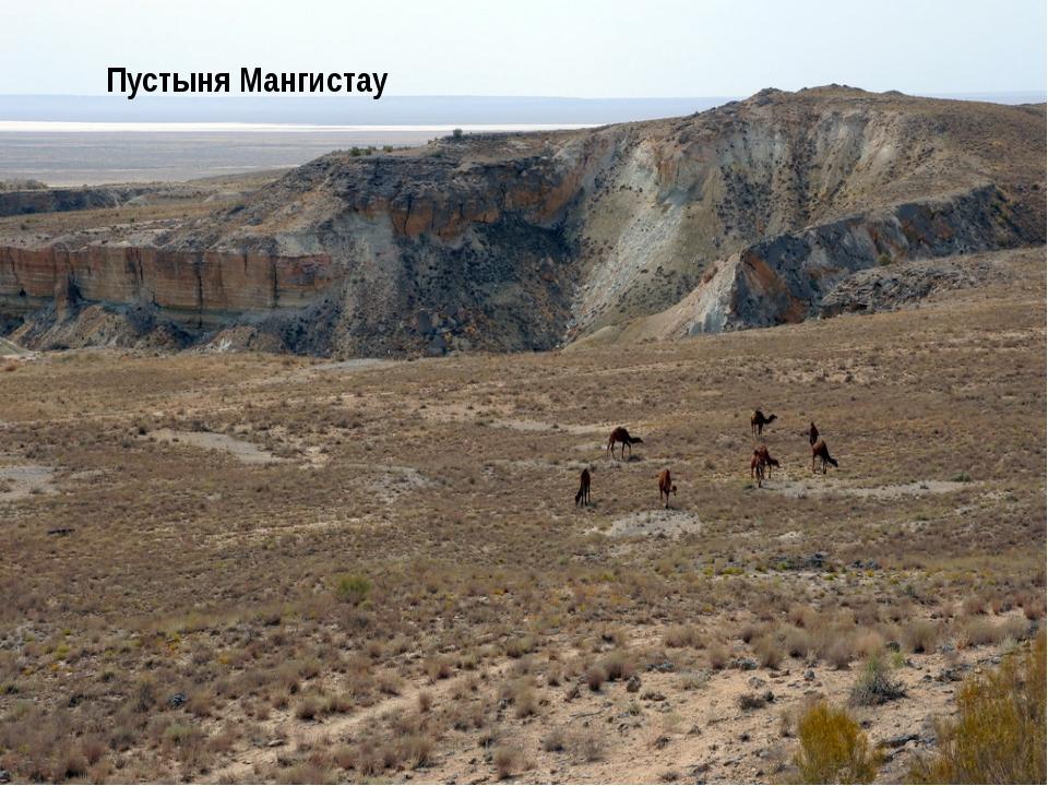 Природные зоны Степи Общего Сырта Пустыня Мангистау Север Юг Почвы Черноземы...