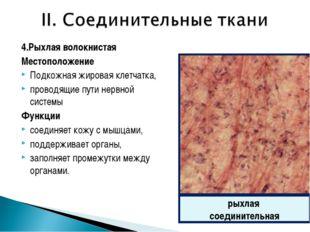 4.Рыхлая волокнистая Местоположение Подкожная жировая клетчатка, проводящие п