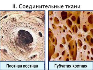 Губчатая костная Плотная костная