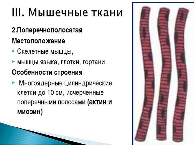 2.Поперечнополосатая Местоположение Скелетные мышцы, мышцы языка, глотки, гор...