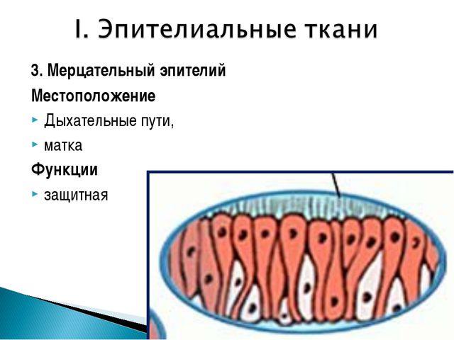 3. Мерцательный эпителий Местоположение Дыхательные пути, матка Функции защит...