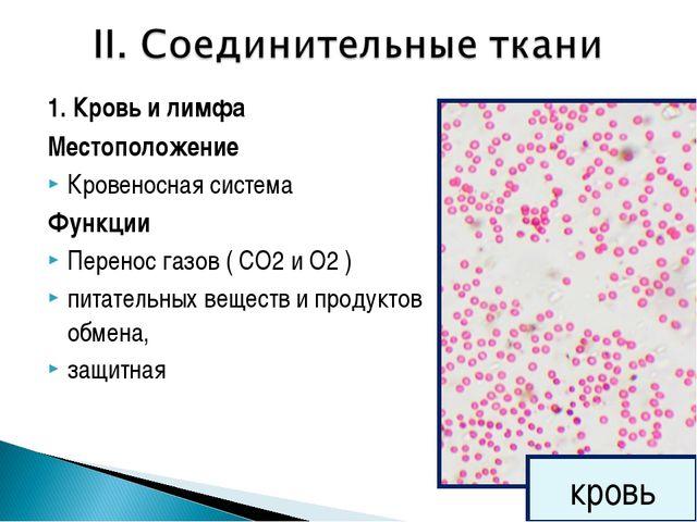 1. Кровь и лимфа Местоположение Кровеносная система Функции Перенос газов ( С...
